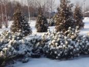 снег пейзаж
