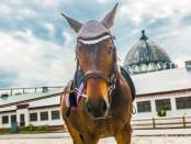 конный центр-9732