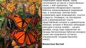 бабочки цитата